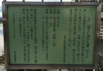 shindukibashi8