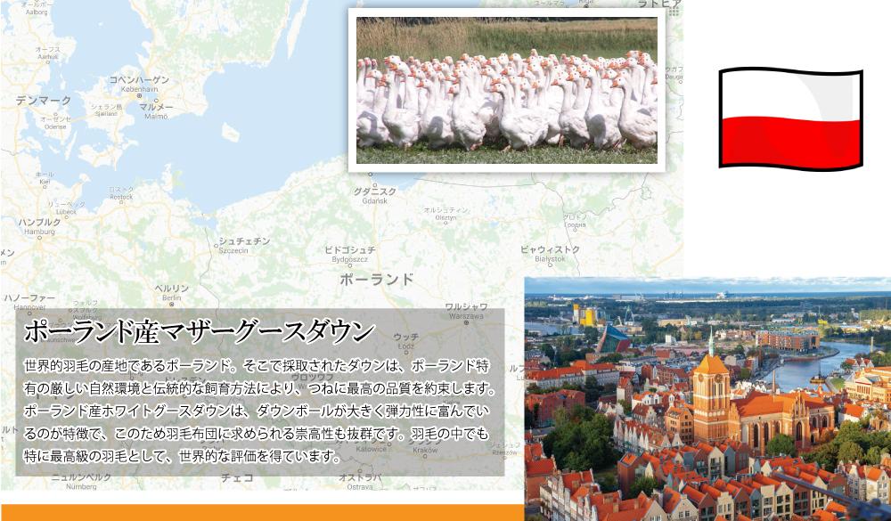 ポーランド産マズルカスホワイトマザーグースダウン95%